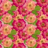 Briar, wild rose,. Seamless pattern texture of pressed dry flowe Stock Photos