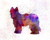 Briard in acquerello Fotografie Stock