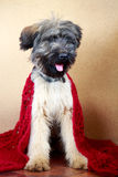 Briard puppy. Little pale yellow briard puppy Stock Photography