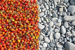 Briar och stenar Arkivfoton