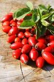 Briars rojos (Rosa Canina) Fotos de archivo