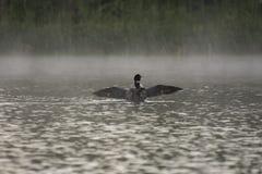 Bribón en el lago en una mañana de niebla Imagenes de archivo