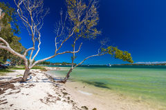 BRIBIE ISLAND, AUS - FEB 14 2016: Beach with trees on the west s Royalty Free Stock Images
