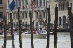 Briccole, cumowniczy delfiny w Wenecja, Włochy Zdjęcia Royalty Free