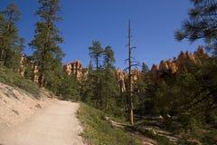 Brice canyon Stock Photography