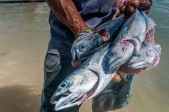 Briciolo del pescatore il suo raccolto del tonno fotografia stock