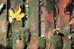 Brick background with a leaf Royalty Free Stock Photography
