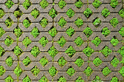 Brick block with grass. Stock Image