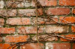 Brick and branches Royalty Free Stock Images