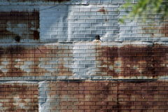 Brick embossed tin shed background Stock Images