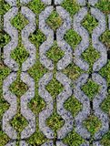 Brick floor are grassy to full Royalty Free Stock Photography