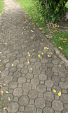 Brick floor pathway and colors of fall Royalty Free Stock Photos