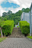 Brick floor pathway with cut bush. Royalty Free Stock Photography