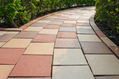 Brick floor pathway with cut bush in both side Stock Photo