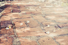 Brick Floor Walking Path. With Fallen Frangipani Flower Stock Photography