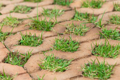 Brick floors with grass Royalty Free Stock Images