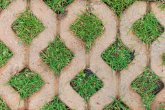 Brick floors with grass Stock Images