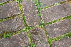 Seamless texture of a paving stone track on a green grass stock images