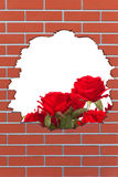 Brick hole with red roses Stock Photo