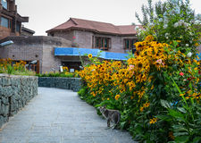 Brick house with flower garden in Srinagar, India Royalty Free Stock Photography