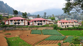 Brick houses with vegetable fields in Kandy, Sri Lanka Royalty Free Stock Images
