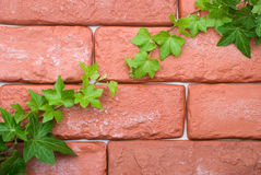 Brick and ivy Stock Image