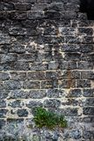 Brick masonry with green dandelion leaves underneath Stock Photo