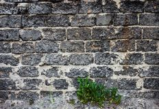 Brick masonry with green dandelion leaves underneath Royalty Free Stock Photos