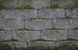 brick moss Zdjęcia Stock