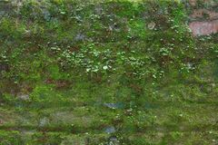 Brick Moss Wall Stock Images