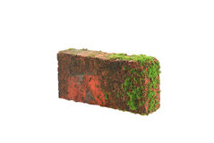 Brick. Mossy Brick Wall on a white background Royalty Free Stock Photography