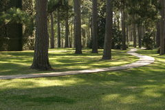 Brick path. A brick path winding through the pine trees in a southern park Royalty Free Stock Photos