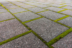 Brick pathway with green moss Royalty Free Stock Photo