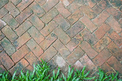 Brick pathway texture. Creative old brick pathway texture with green fresh grass at the bottom Stock Photo