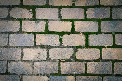 Brick pavement horizontal. Bricks pavement with green moss texture background Royalty Free Stock Photo