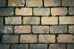 Brick pavement with moss. Bricks pavement with green moss texture background Stock Photography