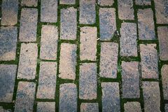 Brick pavement vertical. Bricks pavement with green moss texture background Royalty Free Stock Image