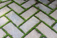 Brick Pavers with Moss. Brown brick pavers with green moss in cracks Royalty Free Stock Photography
