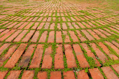 Brick Pavers Outlined by Green Plants Growing Between. Small green plants growing between the edges of individual pavers leave a dramatic pattern Stock Images