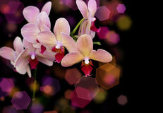 Brick red orchid Stock Images