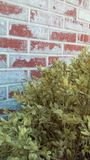 Brick red wall and bush. A brick red and white wall with a light green bush Royalty Free Stock Image