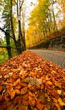 Brick road in the forest. During fall royalty free stock images
