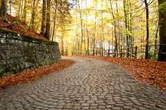 Brick road in the forest Stock Photos