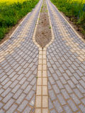 Brick road with green grass Stock Image