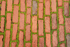 Brick roadway Royalty Free Stock Image
