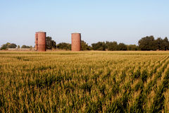 Brick silos Royalty Free Stock Image