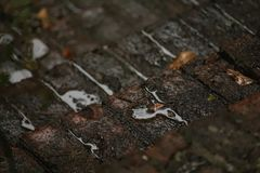 Brick Steps In The Rain Royalty Free Stock Photography