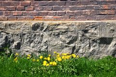 Brick and stone wall, grass and dandelions Stock Photos