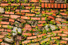 Brick And Stone Wall With Ivy Stock Photos