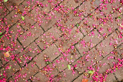 Brick street and pink flower pedals Stock Image